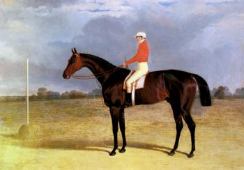 A Dark Bay Racehorse with Patrick Connolly Up